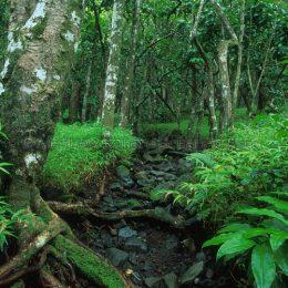 Rainforest Maui, HI
