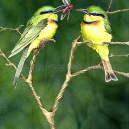 Little Bee-eaters (Transparent Watercolor on W&N 140lb NCP Paper 10 x 14 in) Private Collection