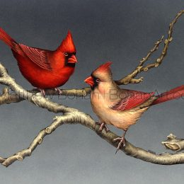 Northern Cardinals (Transparent Watercolor on W&N 140lb NCP Paper 10 x 14 in) Private Collection