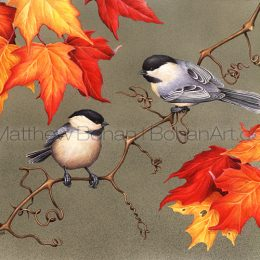 Black-capped Chickadees (Transparent Watercolor on W&N 140lb NCP Paper 10 x 14 in) Private Collection