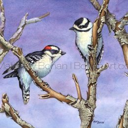 Downy Woodpeckers (Transparent Watercolor on W&N 140lb NCP Paper 10 x 14 in)