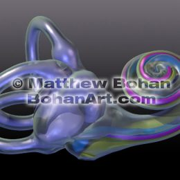 Inner Ear (Images and animation available for licensing)
