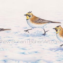 Horned Larks Running (Transparent Watercolor on Arches 140lb HP Paper 9.25 x 24 in)