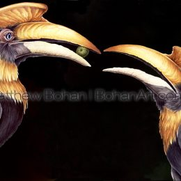 Indian Hornbills Buceros bicornis (Transparent Watercolor on Arches 140lb HP Paper 18 x 24 in) NFS