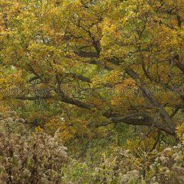 Fall Oak, MI