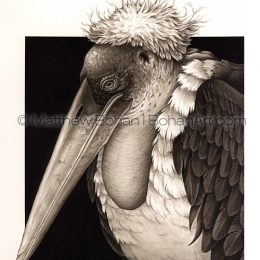 Marabou Stork (Transparent Watercolor on W&N 140lb NCP Paper 10 x 14 in) Private Collection