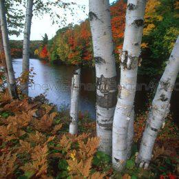 Marquette Birches, MI