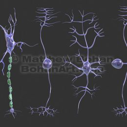 Neuron Types (images available for licensing)
