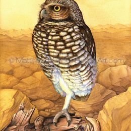 Burrowing Owl (Transparent Watercolor on W&N 140lb NCP Paper 10 x 14 in) Original Available