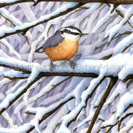 Red-breasted Nuthatch (Transparent Watercolor on W&N 140lb NCP Paper about 10 x 14 in)