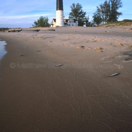 Big Sable Lighthouse and Alewife, MI
