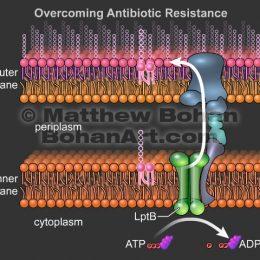 Bacterial Membranes (Adobe Flash)