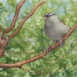 White-crowned Sparrow (Transparent Watercolor on 140lb HP Paper about 7 x 11 in) Original Available