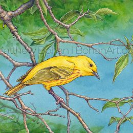 Yellow Warbler (Transparent Watercolor & Ink on Arches 140lb HP Paper 7.5 x 11 in) Original Available