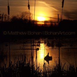 Rose Lake Cattail Sunset, MI