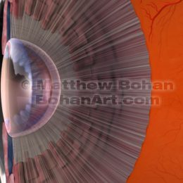 Ciliary Body and Lens of Eye (Lightwave 3d)