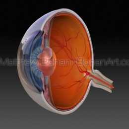 Eye Cross Section (Lightwave 3d) images and animation available for licensing