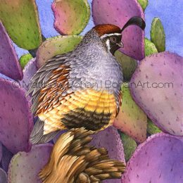 "Gambel's Quail and Santa Rita Prickly Pear (Transparent Watercolor on W&N 140lb NCP Paper 10 x 14 in) Prints are available <a href=""https://www.etsy.com/listing/259926263/print-of-gambels-quail-prickly-pear?ref=shop_home_active_46"">here.</a>"