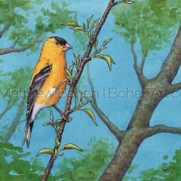 "American Goldfinch (Transparent Watercolor & Ink on Arches 140lb HP Paper about 8 x 10 in) Original painting is available <a href=""https://www.etsy.com/listing/84504753/original-watercolor-painting-of-american?ref=shop_home_active_38"">here.</a>"