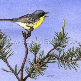 Kirtland's Warbler (Transparent Watercolor on W&N 140lb NCP Paper about 8 x 14 in) NFS