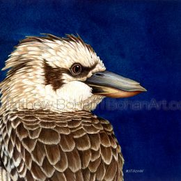 Kookaburra (Transparent Watercolor on W&N 140lb NCP Paper 8.5 x 12.5 in) Original Available
