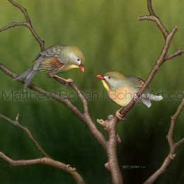 Leothrix –Pekin Robin (Transparent Watercolor on W&N 140lb NCP Paper 10 x 14 in) Private Collection