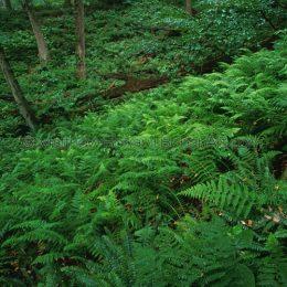 Pennsylvania Forest Floor