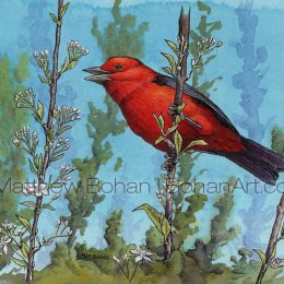 "Scarlet Tanager (Transparent Watercolor & Ink on Arches 140lb HP Paper 5 x 7 in) Original painting is available <a href=""https://www.etsy.com/listing/86826872/original-watercolor-painting-of-scarlet?ref=shop_home_active_28"">here.</a>"