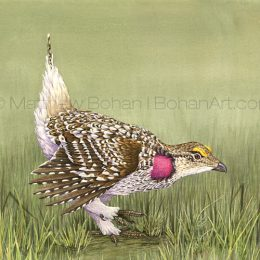 "Sharp-tailed Grouse (Transparent Watercolor on W&N 140lb Lana Paper 10 x 14 in) Original is available. Prints can be found <a href=""https://www.etsy.com/listing/215423215/print-of-sharp-tailed-grouse-watercolor?ref=shop_home_active_33"">here.</a>"