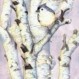Tufted Titmouse on Birch (Transparent Watercolor on W&N 140lb NCP Paper 10 x 14 in)