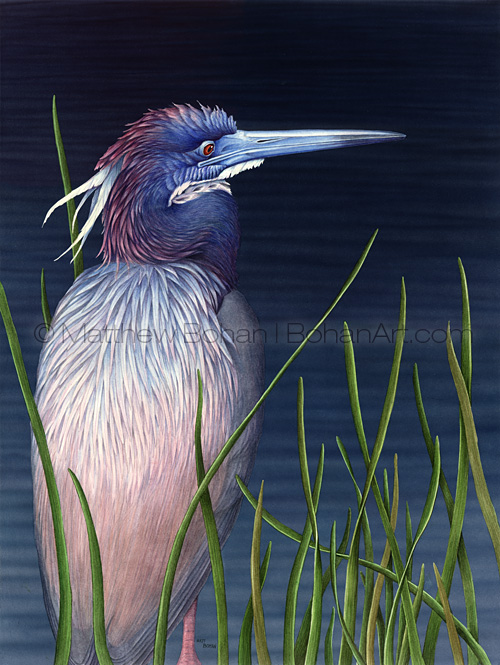 Tricolored Heron (Transparent Watercolor on Arches 140lb HP Paper 18 x 24 in) Original Available
