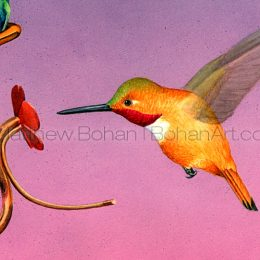 Rufous Hummingbird (Detail from 18 x 24in transparent watercolor)