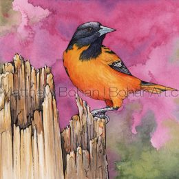 Redbud Baltimore Oriole (5.5 x 7.5in Transparent Watercolor and Ink)