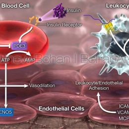 Endothelial Adhesion (Lightwave and Photoshop)