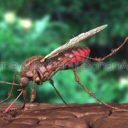 Mosquito (Lightwave 3D)