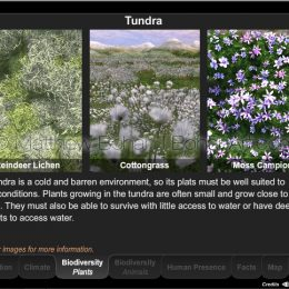 Plant Biodiversity of Tundra Interactive Module (Lightwave 3d, Eon Vue, Photoshop, Flash)